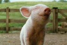 Pigs / by Richard Mirto