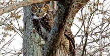 Bird Watching in Williamson County