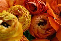 Autumnal Bride / {Autumnal Wedding Inspiration}