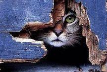 Feline Friends / Fun, furry, adorable cats!