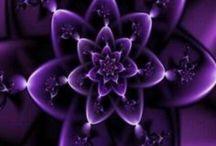 purple / by Kristy DiGiacomo