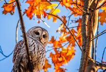 Everything Autumn