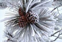Winter Wonderland / Winter snowy scenes
