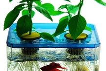 Aquaponics System / This is a Aquaponics System Board For Everyone. If you want to be added to the Group send me an email with your Pinterest URL and I'll add you as a collaborator. kelsie@successetc.com then you can invite all your friends.  / by Congstone Daily Deals