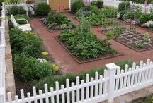 KITCHEN GARDEN / A simple space in yard to grow organic fruit, vegetables & herbs for personal consumption.  / by Janice Hunt-Pittman
