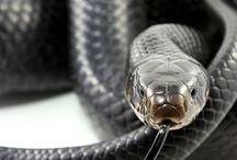 reptiles / serpientes,etc...