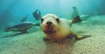 Cabo Fishing & Wildlife / Cabo San Lucas Fish & Wildlife