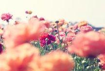 F L O R A L / Flowers