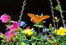 Garden / by Elena Lamberson