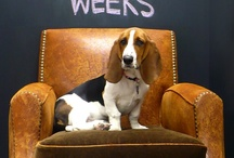 Our office pup, Penny / Meet Penny!  Hush Puppies' newest staff member...