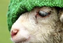 Sheep / by Nicole de Boer