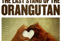 Orangutan rescue / Orangutans in danger of extinction and the people who are trying to save them