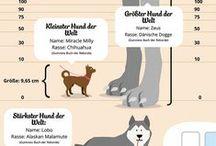 Cool Dog Facts / Cool Fakten über Hunde Cool Dog Facts