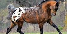 Horses: Those beautiful creatures / All the pictures of horses