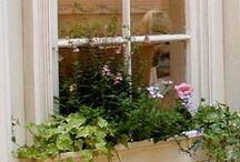 Garden: Window Boxes & Containers  / by Philip Burke