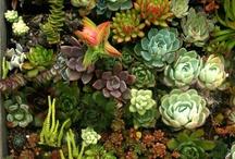 Gardening / by Marco Fernandez