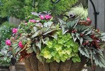 Gardening/Plants & Tips / by Carla Burgin