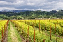 Spring in Sonoma / by Rodney Strong Vineyards
