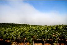 Summer in Sonoma / by Rodney Strong Vineyards