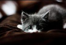 Pretty Kitties;; 3 / by Brianna Allen