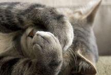 Pretty Kitties;; 4 / by Brianna Allen