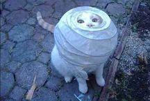 Funny Kitties #3 / by Brianna Allen