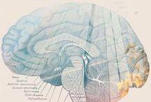 UX // Gestalt principles & neuroscience