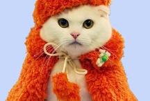 Kitty Cats Galore
