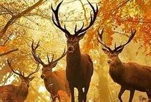 Beauty: Hello, Deer