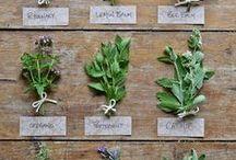 Herbal Living...Mints