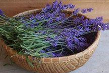 Herbal Living...Lavender