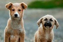 URLAUB MIT HUND / Auf dieser Pinnwand geht es um das Reisen mit Hund, Wandern mit Hund, Urlaub mit Hund, Campen mit Hund und allgemeine Tips, rund um den Urlaub mit Hunden. Hier findest du zahlreiche Tips und Tricks rund zu den Themen Reisen mit Hunden.