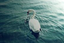 Animals / by Chrissy Cross