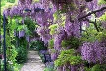Garden Love / by A Gibson