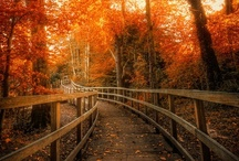 Fall!  / by Alysia Caughron