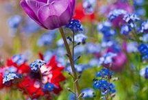 Flowers / by Nicky Gosen