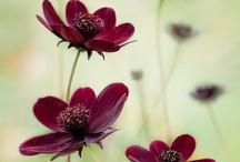 Organizing | Gardening / Gardening tips and inspiration. Organizing your gardening.
