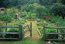 Gardening / by Heather Berchtold