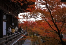 """Autumn Colors In Kyoto! / #Momijigari (紅葉狩), from the Japanese #momiji (紅葉), """"red leaves"""" or """"#maple tree"""" and kari (狩り), """"hunting"""", is the Japanese tradition of going to visit scenic areas where leaves have turned red in the autumn. Many Japanese people take part in this, with the cities of Nikkō and Kyoto being particularly famous destinations. The tradition is said to have originated in the Heian era as a cultured pursuit, and is the reason why many deciduous trees can be found in the #Kyoto area."""