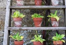 plants and garden design / by Johanna Wilkes