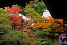 Eikan-dō Zenrin-ji (永観堂禅林寺) Autumn 2011 in Kyoto! / The Eikan-dō Zenrin-ji (永観堂禅林寺) compound is nestled in Kyoto's Eastern Mountain (Higashiyama), and its buildings, most of them connected by covered walkways and staircases, are scattered among a range of heights. The Founder's Hall (御影堂) enshrines and honours Hōnen, the founder of Jōdo-shū. The Tahōtō Pagoda is situated at the highest point in the compound, and offers a great view of the surrounding area of. There is also a open cafe in the garden.