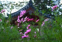 Cosmos Flowers of the Hannya-ji Temple (般若寺) In Nara! / Last year I went to the Hannya-ji Temple in Nara to experience the cosmos flowers, here is the account of that adventure. If you like to go there the cosmos flowers bloom in autumn from mid September till mid November.