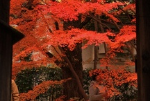Red Maple Leaves of Renge-ji Temple! / Shigenao Imaeda, a retainer of the Maeda clan in Kaga (present day Ishikawa Prefecture), entered the priesthood around the period from 1661 to 1673. He built a residence here and spent his later years associating with such people as Jozan Ishikawa and Tanyu Kano. His grandson, Chikayoshi, who admired the virtues Shigenao, transferred a temple from Hichijo-shiokoji to this place in order to pray for the repose of his late grandfather. He made it a sub-temple of the Enryakuji Jitsuzobo Temple.