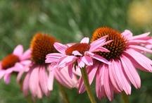 North Carolina Nursery and Landscape Association / Environmental, sustainable, credible, enjoyable