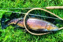 sport  / www.flyfishingpodcast.com #trout #fly fishing #sport #brown trout #fish #fly tying #fly / by Fly Fishing