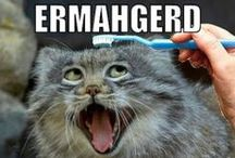 Ermahgerd! / Honestly, the first time I saw ermahgerd I nearly died.  Seriously, almost busted a gut.  Now it's just silly and still makes me giggle when I find one of these gems.