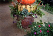 Fall Decor / by Dana Fussner