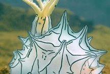 Graphic sea slugs / Nudibranch - wonderfull little creatures