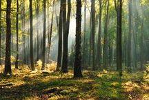 Hêtre / Le hêtre est un bois dur qui brûle moins facilement que, par exemple, le bouleau. Le hêtre est donc adapté à une grande cheminée ou poêle. Le hêtre fournit beaucoup de chaleur, peu de fumée et des flammes attrayantes.