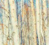 Bouleau / Un excellent bois de chauffage. Le bois de bouleau produit une combustion très propre, où l'oxygène est peu nécessaire, ce qui évite l'encrassement de votre cheminée. Le rendement thermique est élevé. Sa belle écorce facilite la prise du feu et donne une belle flamme bleue avec une agréable odeur de bois.